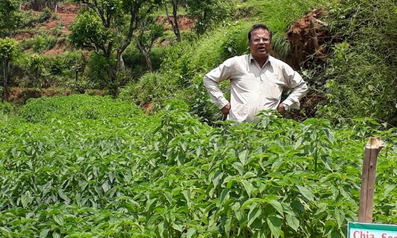सरकारी जागिर छाडेर जडिबुटी खेती : जहाँ छन्, सामान्य झारपातदेखि किलोकै ५० लाख पर्ने वनस्पती